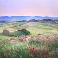 Di bawah mentari Toscana: Val d'Orcia